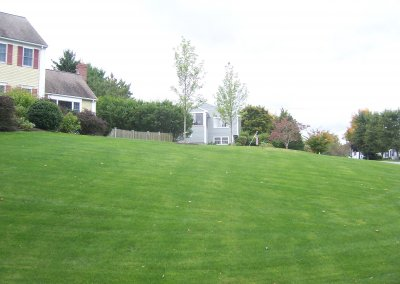 New Lawn After